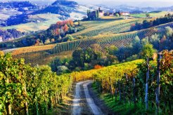 Vineyards and castles of Piemonte in autumn colors North-of-Italy
